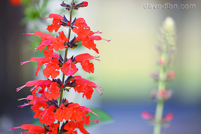 10 Shallow Depth of Field Photographs